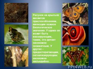 Рисунок на крыльях является приспособлением, имеющим важное биологическое значен