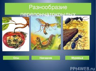 Разнообразие перепончатокрылых Осы Наездник Муравьи