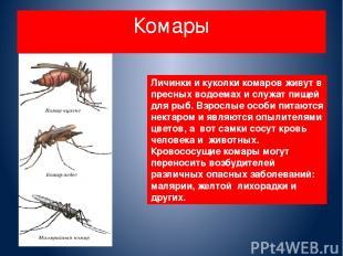 Комары Личинки и куколки комаров живут в пресных водоемах и служат пищей для рыб
