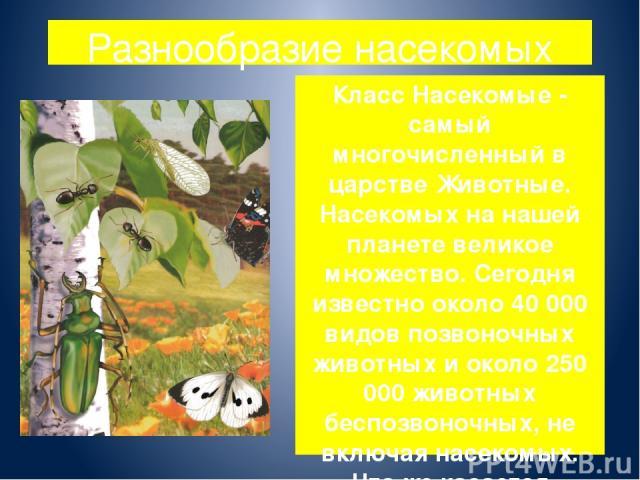 Разнообразие насекомых Класс Насекомые - самый многочисленный в царстве Животные. Насекомых на нашей планете великое множество. Сегодня известно около 40 000 видов позвоночных животных и около 250 000 животных беспозвоночных, не включая насекомых. Ч…