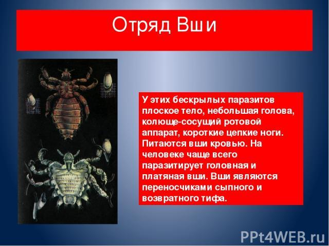 Отряд Вши У этих бескрылых паразитов плоское тело, небольшая голова, колюще-сосущий ротовой аппарат, короткие цепкие ноги. Питаются вши кровью. На человеке чаще всего паразитирует головная и платяная вши. Вши являются переносчиками сыпного и возврат…