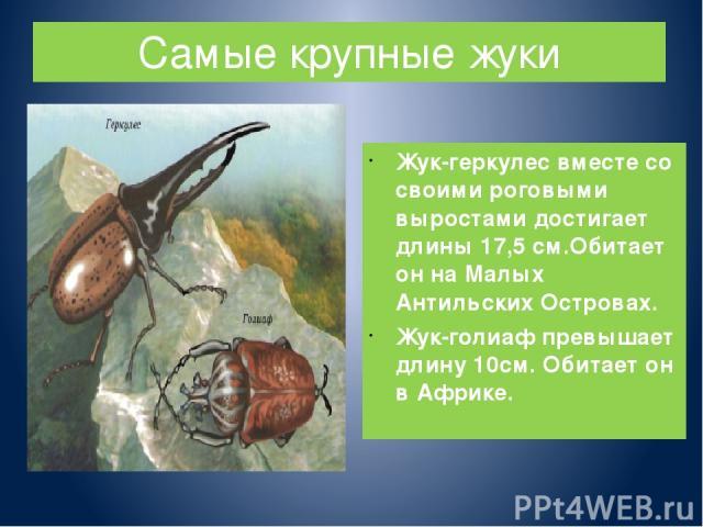 Самые крупные жуки Жук-геркулес вместе со своими роговыми выростами достигает длины 17,5 см.Обитает он на Малых Антильских Островах. Жук-голиаф превышает длину 10см. Обитает он в Африке.