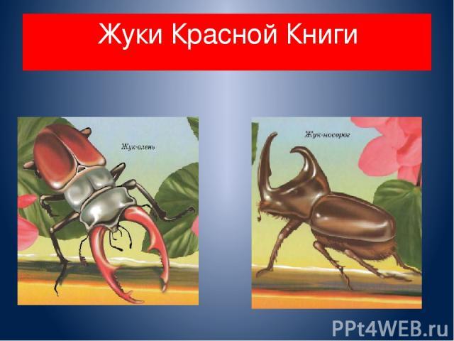 Жуки Красной Книги