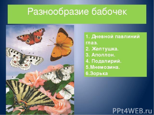 Разнообразие бабочек 1. Дневной павлиний глаз. 2. Желтушка. 3. Аполлон. 4. Подалирий. 5.Мнемозина. 6.Зорька