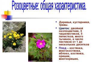 Деревья, кустарники, травы. Цветок: двойной околоцветник, 5 чашелистиков, 5 лепе