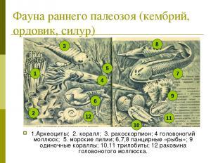 Фауна раннего палеозоя (кембрий, ордовик, силур) 1.Археоциты; 2. коралл; 3. рако