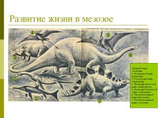 Развитие жизни в мезозое 1.Водный ящер- ихтиозавр 2. Полуводный ящер- плезиозавр