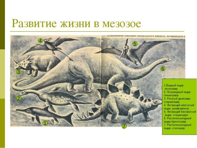 Развитие жизни в мезозое 1.Водный ящер- ихтиозавр 2. Полуводный ящер- плезиозавр 3. Рогатый динозавр- стиракозавр 4. Летающий хвостатый ящер- рамфорингус 5. Летающий бесхвостый ящер- птеранодон 6. Растительноядный ящер-бронтозавр 7. Растительноядный…