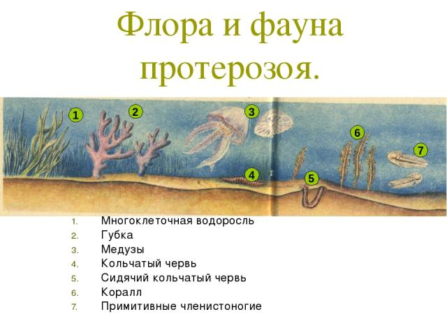 Флора и фауна протерозоя. Многоклеточная водоросль Губка Медузы Кольчатый червь Сидячий кольчатый червь Коралл Примитивные членистоногие 1 2 3 4 5 6 7