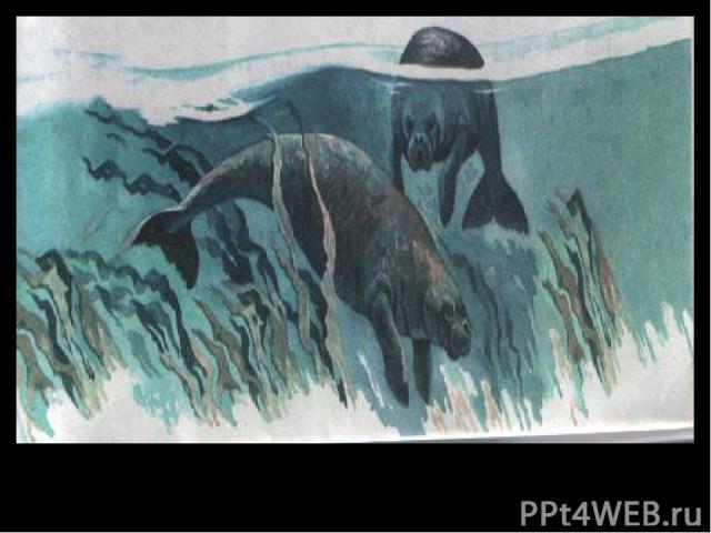 Морские коровы