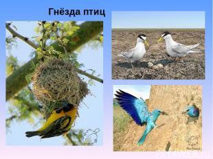 Гнёзда птиц