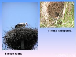 Гнездо аиста Гнездо жаворонка