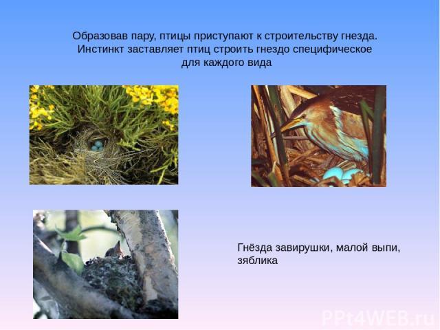 Образовав пару, птицы приступают к строительству гнезда. Инстинкт заставляет птиц строить гнездо специфическое для каждого вида Гнёзда завирушки, малой выпи, зяблика