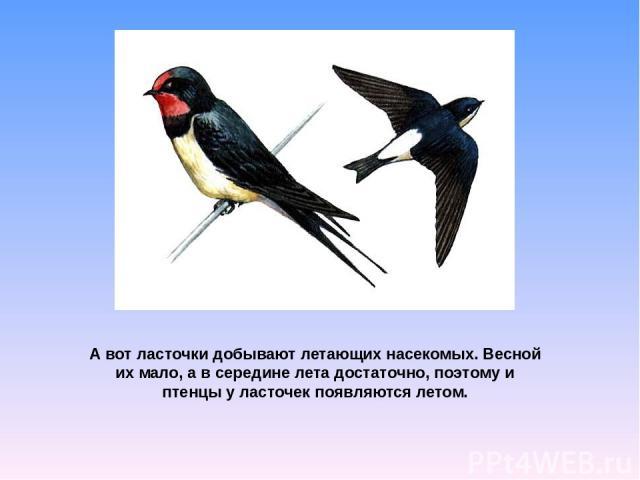 А вот ласточки добывают летающих насекомых. Весной их мало, а в середине лета достаточно, поэтому и птенцы у ласточек появляются летом.