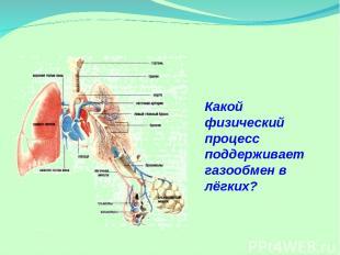 Какой физический процесс поддерживает газообмен в лёгких?