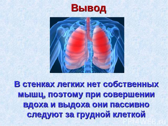 Вывод В стенках легких нет собственных мышц, поэтому при совершении вдоха и выдоха они пассивно следуют за грудной клеткой