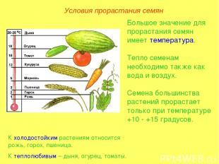 Большое значение для прорастания семян имеет температура. Тепло семенам необходи
