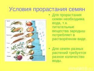 Условия прорастания семян Для прорастания семян необходима вода, т.к. питательны