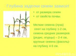 Глубина заделки семян зависит от размера семян от свойств почвы. Мелкие семена (