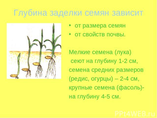 Глубина заделки семян зависит от размера семян от свойств почвы. Мелкие семена (лука) сеют на глубину 1-2 см, семена средних размеров (редис, огурцы) – 2-4 см, крупные семена (фасоль)- на глубину 4-5 см.