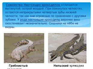 Семейство Настоящих крокодилов отличается вытянутой, острой мордой. При сомкнуты