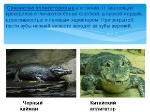 Семейство аллигаторовые в отличии от настоящих крокодилов отличаются более корот