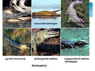 Крокодилы гангский гавиал нильский крокодил гребнистый крокодил щучий аллигатор