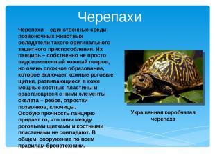 Черепахи - единственные среди позвоночных животных обладатели такого оригинально