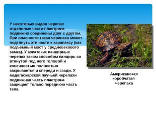 У некоторых видов черепах отдельные части пластрона подвижно соединены друг с др