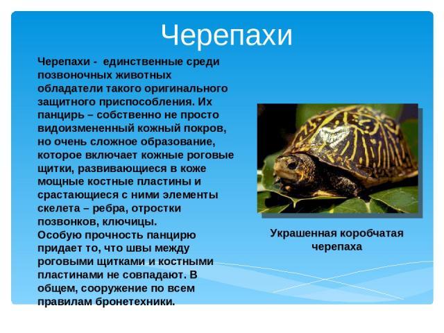 Черепахи - единственные среди позвоночных животных обладатели такого оригинального защитного приспособления. Их панцирь – собственно не просто видоизмененный кожный покров, но очень сложное образование, которое включает кожные роговые щитки, развива…
