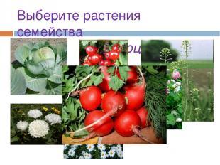 Выберите растения семейства Крестоцветные