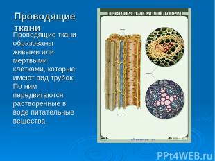Проводящие ткани Проводящие ткани образованы живыми или мертвыми клетками, котор
