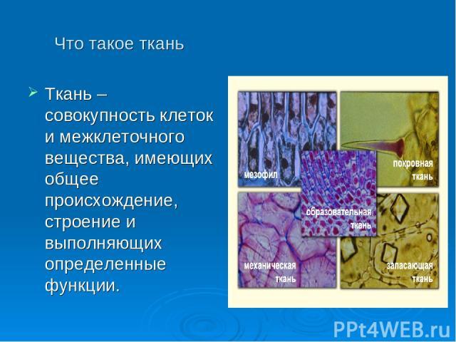 Что такое ткань - Ткань – совокупность клеток и межклеточного вещества, имеющих общее происхождение, строение и выполняющих определенные функции.