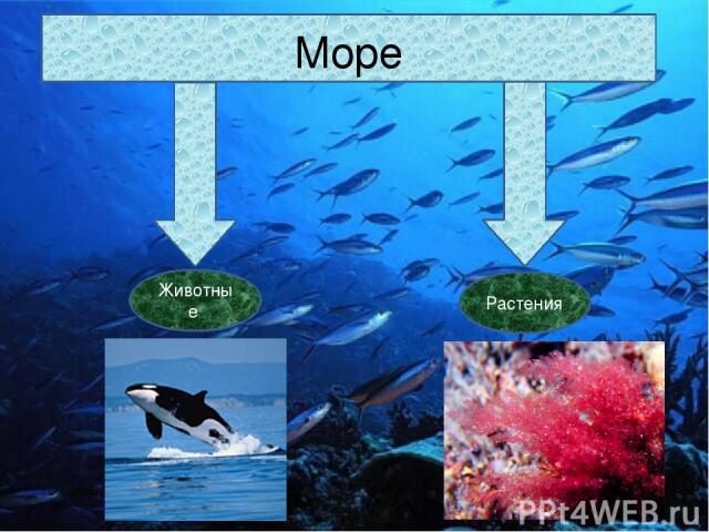 Море Животные Растения