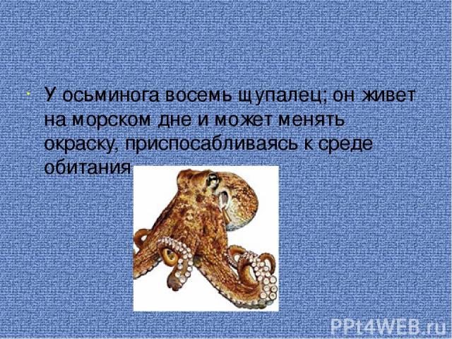 У осьминога восемь щупалец; он живет на морском дне и может менять окраску, приспосабливаясь к среде обитания.