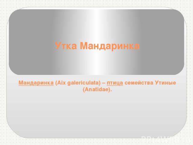 Утка Мандаринка Мандаринка(Aix galericulata) –птицасемейства Утиные (Anatidae).