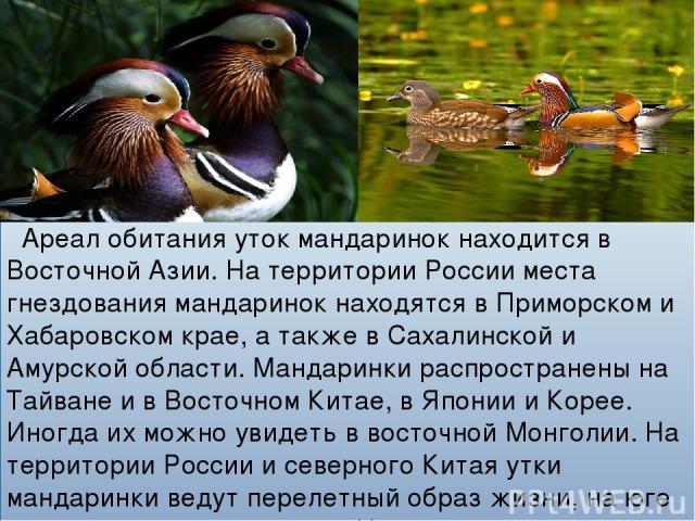 Ареал обитания уток мандаринок находится в Восточной Азии. На территории России места гнездования мандаринок находятся в Приморском и Хабаровском крае, а также в Сахалинской и Амурской области. Мандаринки распространены на Тайване и в Восточном Кита…