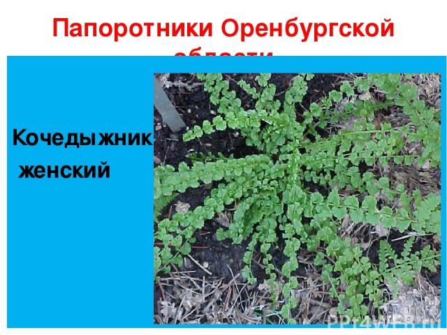 Папоротники Оренбургской области Кочедыжник женский