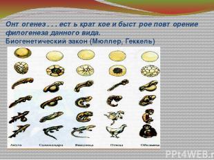Онтогенез . . . есть краткое и быстрое повторение филогенеза данного вида. Биоге