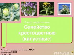 Класс двудольные Семейство крестоцветные (капустные) Учитель географии и биологи