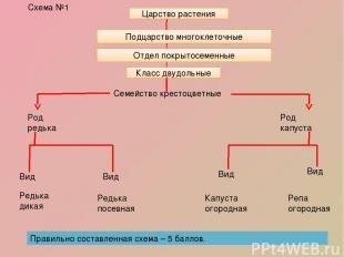 Схема №1 Класс двудольные Семейство крестоцветные Род редька Род капуста Вид Вид