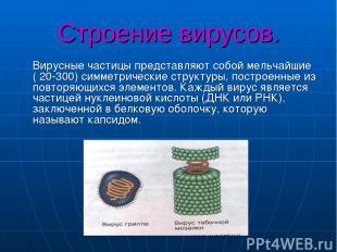 Строение вирусов. Вирусные частицы представляют собой мельчайшие ( 20-300) симме