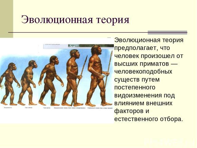 Эволюционная теория Эволюционная теория предполагает, что человек произошел от высших приматов — человекоподобных существ путем постепенного видоизменения под влиянием внешних факторов и естественного отбора.