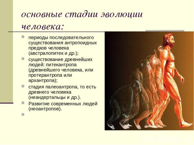 основные стадии эволюции человека: периоды последовательного существования антропоидных предков человека (австралопитек и др.); существование древнейших людей: питекантропа (древнейшего человека, или протерантропа или архантропа); стадия палеоантроп…