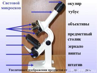 Световой микроскоп Увеличивает изображения предметов от ___ до ____ раз. окуляр