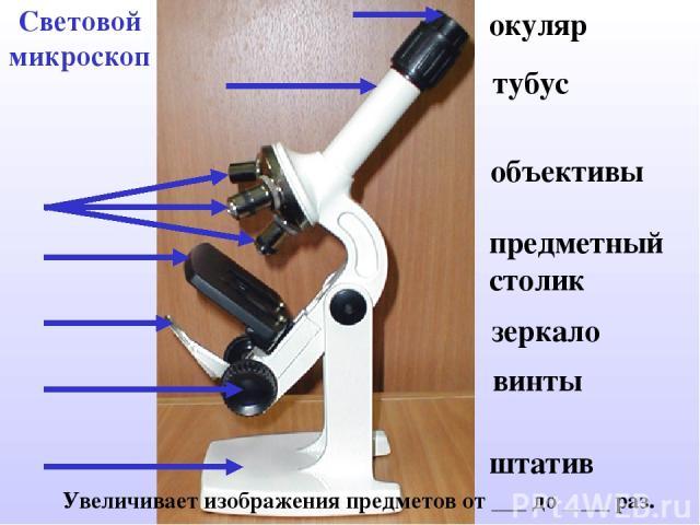 Световой микроскоп Увеличивает изображения предметов от ___ до ____ раз. окуляр тубус объективы предметный столик зеркало винты штатив