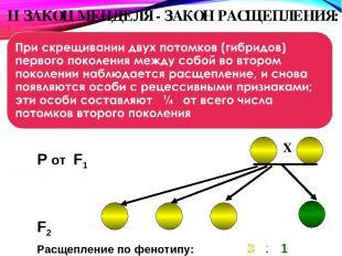 II ЗАКОН МЕНДЕЛЯ - ЗАКОН РАСЩЕПЛЕНИЯ: При скрещивании двух потомков ( F2 P от F1