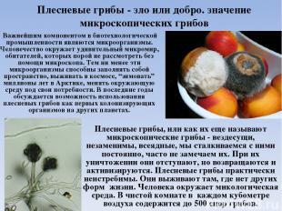 Плесневые грибы - зло или добро. значение микроскопических грибов Важнейшим комп