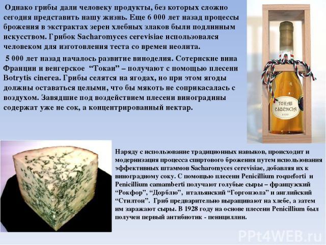Однако грибы дали человеку продукты, без которых сложно сегодня представить нашу жизнь. Еще 6000 лет назад процессы брожения в экстрактах зерен хлебных злаков были подлинным искусством. Грибок Sacharomyces cerevisiae использовался человеком для изг…