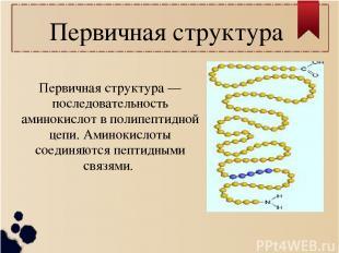 Первичная структура Первичная структура — последовательность аминокислот в полип